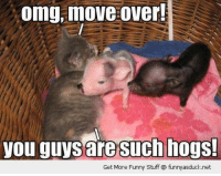 Funny Stuff: omg, move over!  you guys are such hogs!  Get More Funny Stuff funny asduck.net