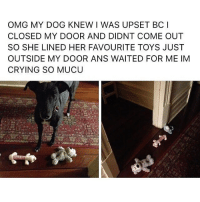 Crying, Memes, and Omg: OMG MY DOG KNEW I WAS UPSET BC I  CLOSED MY DOOR AND DIDNT COME OUT  SO SHE LINED HER FAVOURITE TOYS JUST  OUTSIDE MY DOOR ANS WAITED FOR ME IM  CRYING SO MUCU Follow my other accounts @antisocialtv @lola_the_ladypug @x__antisocial_butterfly__x ❤️