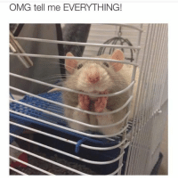 30 Of The Most Hilarious Animal Pictures That Will Make Your Day: OMG tell me EVERYTHING! 30 Of The Most Hilarious Animal Pictures That Will Make Your Day