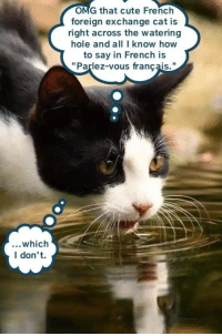 That Cute French Foreign Exchange Cat Is Right Across The Watering Hole And All I Know How To Say In Parlez Vous Francais Which Don T