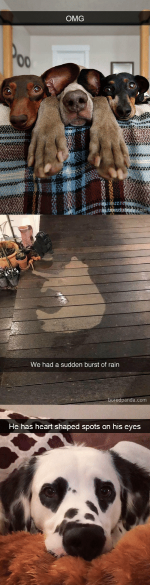 babyanimalgifs:  Doggo snapsvia boredpanda.com @animalsnaps​: OMG   We had a sudden burst of rain  boredpanda.com   He has heart shaped spots on his eyes babyanimalgifs:  Doggo snapsvia boredpanda.com @animalsnaps​