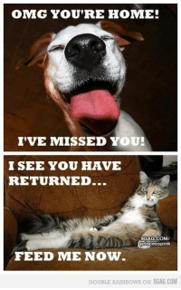 OMG YOU'RE HOME!  I'VE MISSED YOU!  I SEE YOU HAVE  RETURNED...  9GAG.COMV  princess pink  FEED ME NOW  DOUBLE RAIN Bows ON 9GAG.COM Yep, this has been my experience! :-)