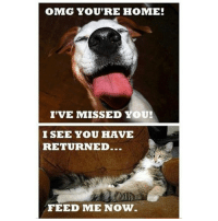 Memes, 🤖, and Dog: OMG YOU'RE HOME!  I'VE MISSED YOU!  I SEE YOU HAVE  RETURNED..  FEED ME NOW. Cat and dog logic