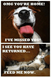 🐕🐾🐈: OMG YOU'RE HOME!  I'VE MISSED YOU!  I SEE YOU HAVE  RETURNED.  FEED ME NOW 🐕🐾🐈