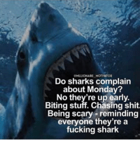 A great one via: @millionaire_motivator ✔️ go follow him for more💯: OMILLIONAIRE MOTIVATOR  Do sharks complain  about Monday?  No they're up early.  Biting stuff. Chasing Shit.  Being scary reminding  everyone they're a  fucking shark A great one via: @millionaire_motivator ✔️ go follow him for more💯