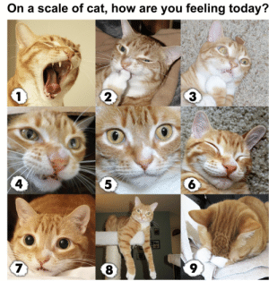Tumblr, Blog, and Today: On a scale of cat, how are you feeling today?  2  3  4  6  9 eennui:  anxietyproblem:  mostly 9  1 and 9