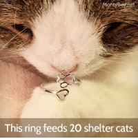 "Animals, Cats, and Cute: On  Boynet  This ring feeds 20 shelter cats Happy Sunday everyone 😺 Help feed 20 shelter cats, and keep thoughts of your furbaby close to your heart all at once. My mom and dad are always calling me their ""kid with paws"" and that is exactly what this ring symbolizes 💜 It is made to remind everyone that kids with paws are family too 💜 It's in my jewelry store right here: MontyBoy.net (link is also in my bio) It comes in 925 Sterling silver and plated with rose gold and the sizes are 5-6.5, 6.5-8 and 8-9.5. Use the coupon code ""MEOW15"" and get 15% off my jewelry collections. Tell me what you think, your favorite color and your size and have a PAWsome snuggly Sunday 😽 Love & Happiness, Monty Remember that every time you get a Monty product you are supporting animals in need 💜 This ring feeds 20 shelter cats! I ship world wide with love 😸✈️. . . . . cats cat thedailykitten catjewelry thedodo Ring mykidhaspaws jewelry jewellery fasion silver cute kittens cats_of_world catoftheday MontyJewelry love me ringe catsofinstagram instacat ilovemycat catfasion cutecat love monty ellen cats_of_instagram"
