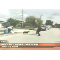 Dogs, Police, and Smashing: ON  DOG ATTACKS OFFICER  LOCAL6.coM Police tase an aggressive dog!! Support out page by smashing the LIKE button! policevideos