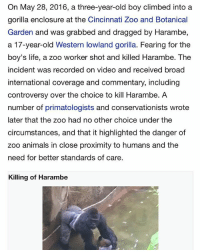 "Animals, Life, and Taken: On May 28, 2016, a three-year-old boy climbed into a  gorilla enclosure at the Cincinnati Zoo and Botanical  Garden and was grabbed and dragged by Harambe,  a 17-year-old Western lowland gorilla. Fearing for the  boy's life, a zoo worker shot and killed Harambe. The  incident was recorded on video and received broad  international coverage and commentary, including  controversy over the choice to kill Harambe. A  number of primatologists and conservationists wrote  later that the zoo had no other choice under the  circumstances, and that it highlighted the danger of  zoo animals in close proximity to humans and the  need for better standards of care  Killing of Harambe 1 year ago today a dark fur gorilla's 🦍 life was taken, comment ""Rip"" to pay respects"