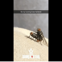 Fucking, Memes, and Wshh: On my fucking knee hahahah These flies were going at it on his knee 😳 WSHH (via @Yunghermitcrab)