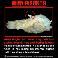 Memes, 🤖, and Gods: ON MY GOD FACTS!  www.om facts online.com I fb.com  facts on  oh my god facts  WWW buzz-innin  When Angler fish mate, they melt into  each other and share their bodies forever.  If a male finds a female, he latches on and  fuses to her, losing his internal organs  until they share a bloodstream.  Join Facebook's Biggest Facts Library with 6 Million+ Fans- www.facebook.com/omgfactsonline