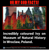 museum of natural history: ON MY GOD FACTS!  www.omg facts online.com I fb.com/om g facts online I eohmy good facts  Show Viral  Incredibly coloured Ivy on  Museum of Natural History  in Wroclaw. Poland.  Join Facebook's Biggest Facts Library with 6 Million+ Fans- www.facebook.com/omgfactsonline