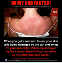 omg facts: ON MY GOD FACTS!!!  www.omg facts online.com I fb.com/omg facts online I Goh my god-facts  OH MY GOD  FACTS!!  age eredit www.commons wikimedia org  When you get a sunburn, it's not your skin  cells being damaged by the sun and dying.  It's your skin cell's DNA being damaged  by the sun and them killing themselves  so they don't turn into cancer.  Join Facebook's Biggest Facts Library with 6 Million+ Fans- www.facebook.com/omgfactsonline