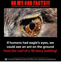 omg facts: ON MY GOD FACTS!!!  www.omg facts online.com I fb.com/omg facts online I Goh my god-facts  OHMYCOD  FACTS!!!  redit www.nationaleaglecenter.org  If humans had eagle's eyes, we  could see an ant on the ground  from the roof of a 10-story building!  Join Facebook's Biggest Facts Library with 6 Million+ Fans- www.facebook.com/omgfactsonline
