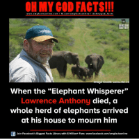 "omg facts: ON MY GOD FACTS!!!  www.omg facts online.com I fb.com/omg facts online I Goh my god-facts  OH MY GOD  FACTS!!!  Image Credit: www.cbc.ca  When the Elephant Whisperer""  Lawrence Anthony  died, a  whole herd of elephants arrived  at his house to mourn him  Join Facebook's Biggest Facts Library with 6 Million+ Fans- www.facebook.com/omgfactsonline"
