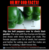 belle pepper: ON MY GOD FACTS!  www.omg facts online.com I fb.com/orm g facts online I eohmygod facts  Female  Male  skeptics stackexchange com  Flip the bell peppers over to check their  gender. The ones with four bumps are females  and those with three bumps are male. The  female peppers are full of seeds, but sweeter  and better for eating raw and the males are  better for cooking. Ididn't know this.  f Join Facebook's Biggest Facts Library with 6 Million+ Fans- www.facebook.com/omgfactsonline