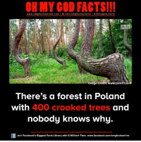 omg facts: ON MY GOD FACTS!!!  www.omg online.com I fb.com/omg facts online I Goh my god-facts  facts mage credit: www.core77.com.  There's a forest in Poland  with 400 crooked trees and  nobody knows why  Join Facebook's Biggest Facts Library with 6 Million+ Fans- www.facebook.com/omgfactsonline