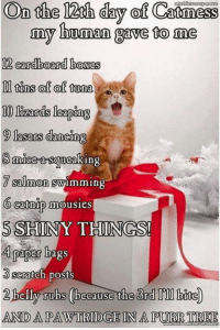 Dancing, Memes, and Salmon: On the 12th day of Catmess  my human gave to me  12 cardboard bosses  ll tins of of tuna  9 lasers dancing  7 salmon  swimming  O catnip mousies  5 SHINY THINGS!  4 paper bags  Scratch posts  AND A PAW  TREE For more cute pics LIKE us at The Purrfect Feline Page