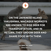 Aww, Cute, and Deer: ON THE JAPANESE ISLAND  YAKUSHIMA, MACAQUE MONKEYS  ARE KNOWN TO RIDE DEER FOR  TRANSPORTATION, AND IN  RETURN, THEY GROOM DEER AND  SHARE FOOD WITH THEM  THE MORE YOU KNOW  @FACT BOLT Follow the world with @intravelist ✈️🌏 😍 Aww cute!