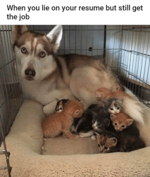 On the job training just got a lot more ruff: On the job training just got a lot more ruff