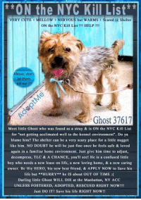 """Andrew Bogut, Best Friend, and Children: *ON the NYC Kill List  VERY CUTE MELLOWNERVOUS but WARMSScared @ Shelter  ON the NYC Kill List !!! HELP!!!  Please, don'  let them  Ghost 37617  Meet little Ghost who was found as a stray & is ON the NYC Kill List  for """"not getting acclimated well to the kennel environment"""". Do ya  blame him? The shelter can be a very scary place for a little nugget  like him. NO DOUBT he will be just fine once he feels safe & loved  again in a familiar home environment. Just give him time to adjust,  decompress, TLC & A CHANCE, you'll see! He is a confused little  boy who needs a new lease on life, a new loving home, & a new caring  owner. Be His HERO, his new best friend, & APPLY NOW to Save his  life but **HURRY*he IS about OUT OF TIME :  Darling little Ghost WILL DIE at the Manhattan, NY ACC  UNLESS FOSTERED, ADOPTED, RESCUED RIGHT NOW!!!  Just DO IT! Save his life RIGHT NOW!! **** To Be KILLED 8/13/18 in NYC ****  Meet little Ghost who was found as a stray & is ON the NYC Kill List for """"not getting acclimated well to the kennel environment"""". Do ya blame him? The shelter can be a very scary place for a little nugget like him. NO DOUBT he will be just fine once he feels safe & loved again in a familiar home environment. Just give him time to adjust, decompress, TLC & A CHANCE, you'll see! He is a confused little boy who needs a new lease on life, a new loving home, & a new caring owner. Be His HERO, his new best friend, & APPLY NOW to Save his life but **HURRY** he IS about OUT OF TIME :(  Darling little Ghost WILL DIE at the Manhattan, NY ACC UNLESS ✔FOSTERED✔ADOPTED✔RESCUED✔RIGHT NOW!!!  Just DO IT! Save his life RIGHT NOW!!  ****************************************** To FOSTER or ADOPT little Ghost, SPEAK UP NOW & Save his Life: Apply with rescues  Or Message Must Love Dogs - Saving NYC Dogs for assistance IMMEDIATELY!!! ****************************************** The general rule is to foster you have to be within 4 hours of the NYC ACC"""