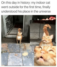 History, Time, and Cat: On this day in history: my indoor cat  went outside for the first time, finally  understood his place in the universe