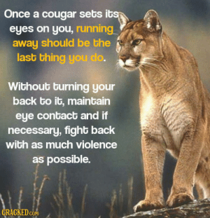 cougar: Once a cougar sets ib  eyes on you, running  away should be the  last thing you do  Without burning your  back to it, maintain  eye contact and if  necessary, fight back  with as much violence  as possible.  GRAGKEDcoN