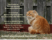 house cat: Once a house cat,  abandoned and alone  he now calls the streets home.  It's not his fault.  He had an irresponsible guardian.  He's simply another victim without a voice.  There are an estimated 60 million  stray and feral cats in the U.S.  We must be a voice forthem.  Speak out for Trap/Neuter/Return  programs in your state.  Animal abandonment is a crime!