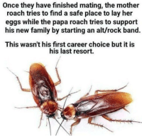 Cut my life into pieces... https://t.co/TxDoYpXWMr: Once they have finished mating, the mother  roach tries to find a safe place to lay her  eggs while the papa roach tries to support  his new family by starting an alt/rock band.  This wasn't his first career choice but it is  his last resort. Cut my life into pieces... https://t.co/TxDoYpXWMr