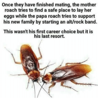 last resort: Once they have finished mating, the mother  roach tries to find a safe place to lay her  eggs while the papa roach tries to support  his new family by starting an alt/rock band.  This wasn't his first career choice but it is  his last resort.