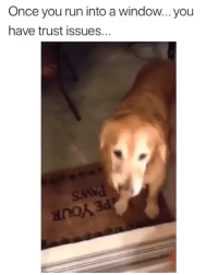 Funny, Lol, and Run: Once you run into a window... you  have trust issues.  anok The door betrayed him once and it wont happen again lol. funniest15 viralcypher funniest15seconds