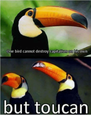 Capitalism, One, and Toucan: One bird cannot destroy capitalism on his own  but toucan Yeaaaaaaa