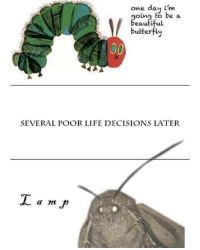 Moth memes: one day im  oing to be a  beautiful  butterfly  100  SEVERAL POOR LIFE DECISIONS LATER Moth memes