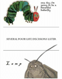 LÄMP: one day i'm  oing to be a  eauti  ful  butterfly  SEVERAL POOR LIFE DECISIONS LATER LÄMP