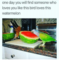 Naw.: one day you will find someone who  loves you like this bird loves this  watermelon Naw.