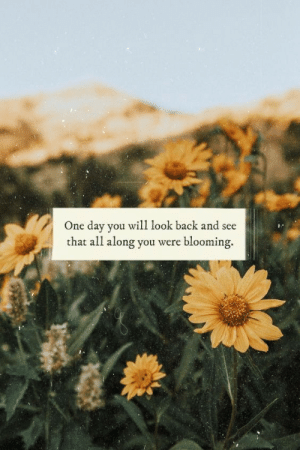 Back, One, and One Day: One day you will look back and see  that all along you were blooming.