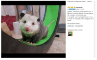 """Exercise, Happy, and Images: One Fast Cat Exercise Wheel... (Green)  AAYAGreat wheel  I got this wheel for my rehab opossum who is  blind and cannot be released. He uses it every  day. He walks on it and even runs  It was pretty easy to put together and is easy  to clean. I'm very happy with it and glad I got it  for him.  Was this review helpful?  Helpful (22) Not helpful (0)  Images in this review <p>This pet exercise wheel review :) via /r/wholesomememes <a href=""""https://ift.tt/2sv5tmK"""">https://ift.tt/2sv5tmK</a></p>"""