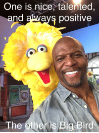 The buddy cop film we need: One is nice, talented  and always positive  The other is Big Bird The buddy cop film we need