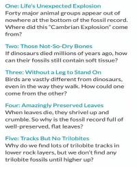 """Here are 5 serious problems that evolutionists face when they infer that the geologic column is indeed showing millions of years of stratification.: One: Life's Unexpected Explosion  Forty major animal groups appear out of  nowhere at the bottom of the fossil record.  Where did this """"Cambrian Explosion"""" come  from  Two: Those Not-So-Dry Bones  If dinosaurs died millions of years ago, how  can their fossils still contain soft tissue?  Three: Without a Leg to Stand On  Birds are vastly different from dinosaurs,  even in the way they walk. How could one  come from the other?  Four: Amazingly Preserved Leaves  When leaves die, they shrivel up and  crumble. So why is the fossil record full of  well-preserved, flat leaves?  Five: Tracks But No Trilobites  Why do we find lots of trilobite tracks in  lower rock layers, but we don't find any  trilobite fossils until higher up? Here are 5 serious problems that evolutionists face when they infer that the geologic column is indeed showing millions of years of stratification."""