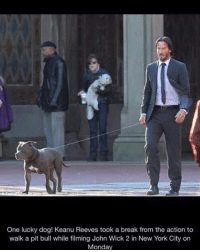 gigi the pit-bull advocate: One lucky dog! Keanu Reeves took a break from the action to  walk a pit bull while filming John Wick 2 in New York City on  Monday gigi the pit-bull advocate