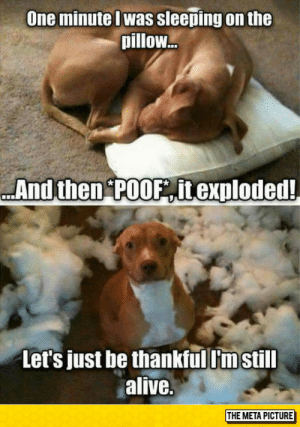 laughoutloud-club:  Let's Be Thankful: One minute Iwas sleeping on the  pillow...  And then POOF itexploded!  Let's just be thankful I'm still  alive.  THE META PICTURE laughoutloud-club:  Let's Be Thankful