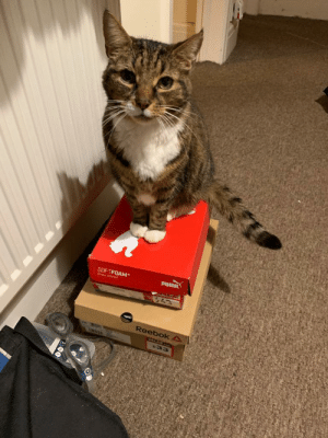 One of my cats being a model on the shoeboxes... the best picture of him I think: One of my cats being a model on the shoeboxes... the best picture of him I think