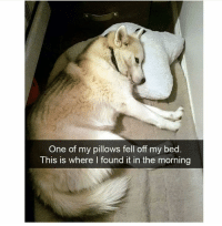 Cute, Funny, and Memes: One of my pillows fell off my bed  This is where I found it in the morning 42 Cute Animal Memes That Never Stop Being Funny