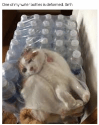 @kittersdoingthings has a bunch of pictures of cats: One of my water bottles is deformed. Smh @kittersdoingthings has a bunch of pictures of cats