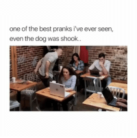 Memes, Best, and 🤖: one of the best pranks i've ever seen,  even the dog was shook..