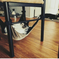 One of the best ways to spend lazy Friday nights: Chilling with your feline cat....under your chair! 😺 @keekircat . . Get the hammock @keekircat . . Link in bio! love instagood fbf cute happy katze caturday catlady lazy catloverscatoftheday chilln hammock flop catstagram catloaf pusheen catlove: One of the best ways to spend lazy Friday nights: Chilling with your feline cat....under your chair! 😺 @keekircat . . Get the hammock @keekircat . . Link in bio! love instagood fbf cute happy katze caturday catlady lazy catloverscatoftheday chilln hammock flop catstagram catloaf pusheen catlove