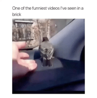 Videos, Live, and Girl Memes: One of the funniest videos lI've seen in a  brick what's wrong with this bird creds to unilad