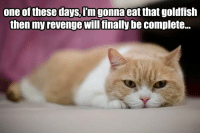 """<p><a href=""""https://omg-images.tumblr.com/post/170262402462/revenge-is-tasty"""" class=""""tumblr_blog"""">omg-images</a>:</p>  <blockquote><p>Revenge is tasty</p></blockquote>: one of these days,f'mgonna eat that goldfish  then my revenge willfinally be complete. <p><a href=""""https://omg-images.tumblr.com/post/170262402462/revenge-is-tasty"""" class=""""tumblr_blog"""">omg-images</a>:</p>  <blockquote><p>Revenge is tasty</p></blockquote>"""