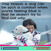 Comfortable, Love, and Memes: One reason a dog can  be such a comfort when  you're feeling blue is  that he doesn't try to  find out why.  love melovemydog.fans  S love me love my dog