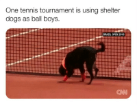 "Bless Up, Dogs, and Love: One tennis tournament is using shelter  dogs as ball boys.  BRAZIL OPEN 2016  CAN PUT ALL SHELTER DOGGIES IN WORK PLACES. LET EVERYONE PET THEM, FEED THEM, WALK THEM ON COFFE BREAKS, AND LOVE THEM. AND LET THEM LIVE THERE. ALL U CORPORATE JOBS HAVE HELLA OPEN OFFICES FROM WHEN U FIRED SUZY THE HR LEAD WHO EVERYONE ABSOLUTELY DESPISES BC U CALL SUZY LIKE ""hey Suzy! I want to change primary care doctors. Anything I need to do with my insurance to get that done?"" AND SHE LIKE ""YOU HAVE TO CALL CIGNA WE HAVE NO INVOLVEMENT"" AND SUZY ANSWER EVERY QUESTION LIKE THIS FOR 11 YEARS AND THEN MARY THE CFO CALL HER AND SUZY LIKE ""IDK MARY CALL CIGNA"" AND MARY LIKE ""oh you've messed with the wrong one Suzy - chuck will be firing you tomorrow bc we finally realized you don't actually do anything bye suze"" BAM - GIVE SUZY'S OFFICE TO THE DOGGIES U FEEL ME? PROBLEM SOLVED BLESS UP 🤤😍😂"